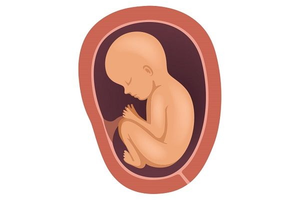 بهترین موقعیت قرارگیری جفت جنین