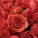 مامان rose